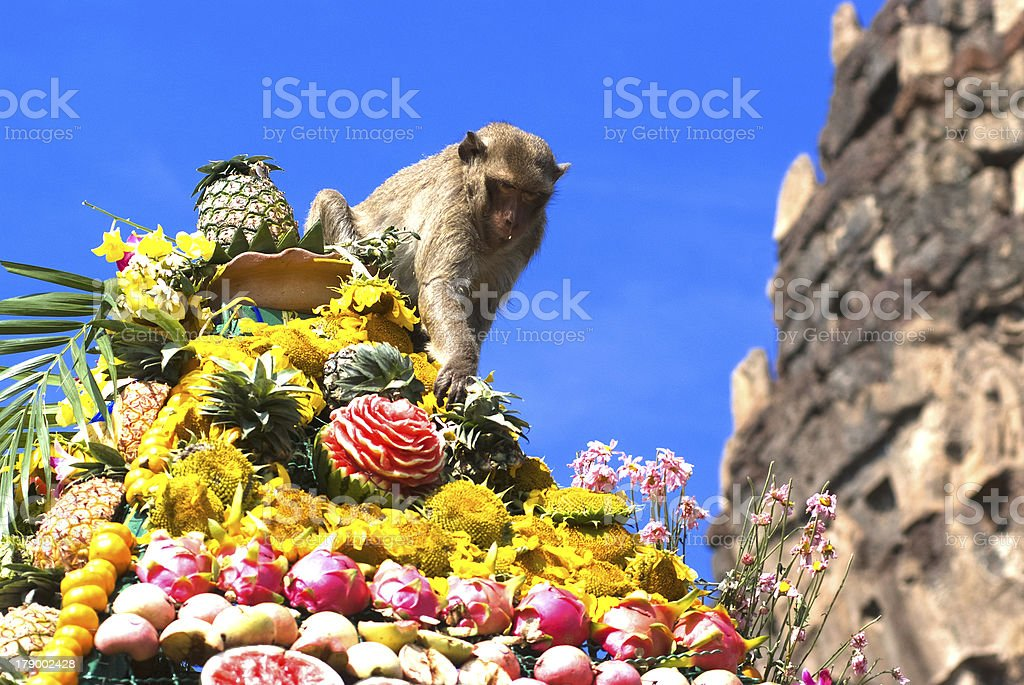 Monkey buffet festival in Thailand royalty-free stock photo