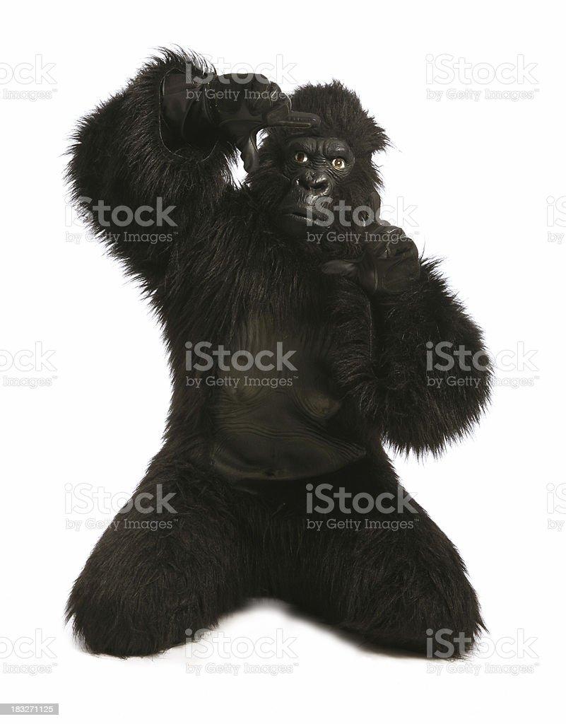 Monkey Business - Framing royalty-free stock photo