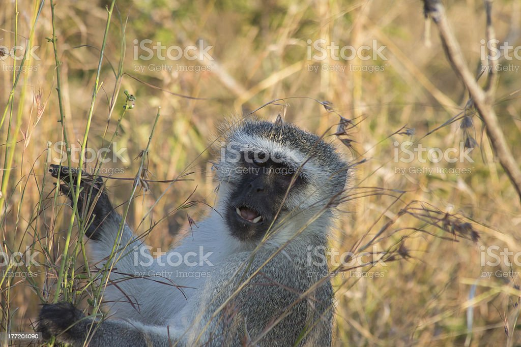 Monkey Business royalty-free stock photo