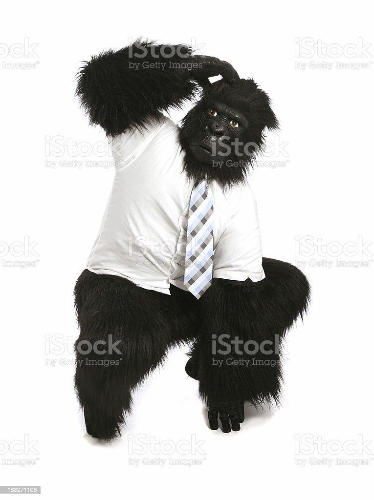Monkey Business - Puzzled royalty-free stock photo