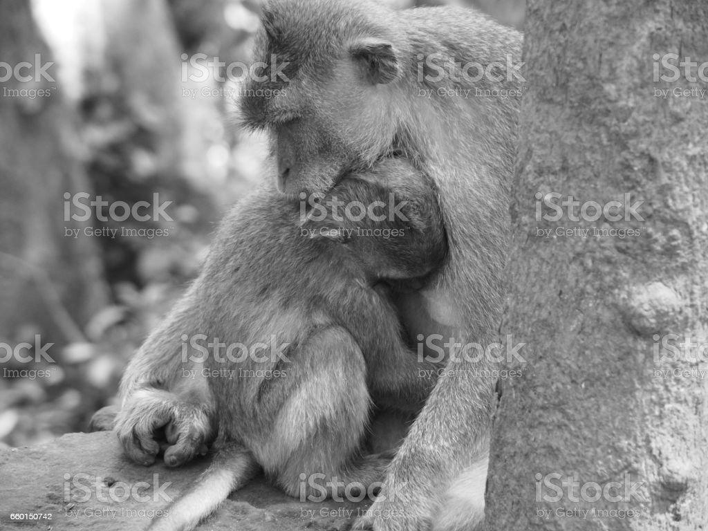 Monkey Cuddle stock photo