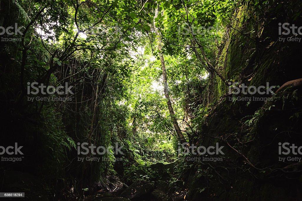 Monkey Forest Sanctuary, Ubud, Bali, Indonesia stock photo