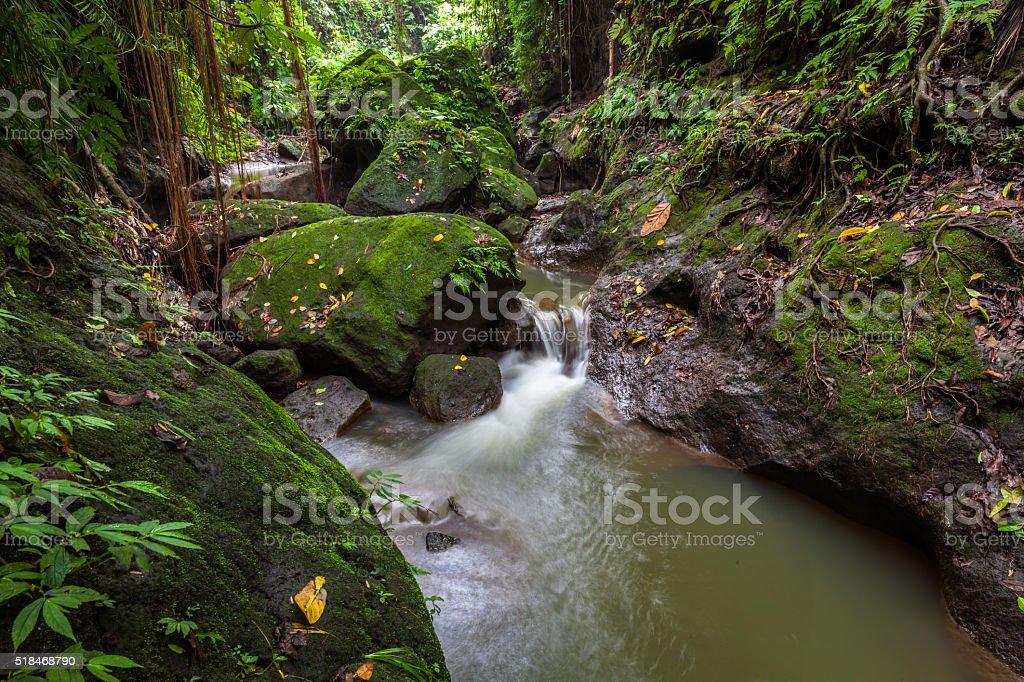 Monkey Forest Sanctuary, Ubud, Bali stock photo