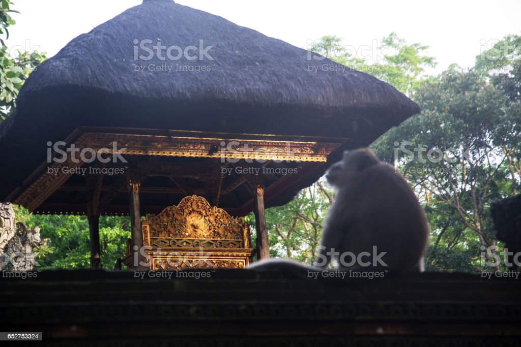 Monkey Forest Ubud Bali Indonesia stock photo