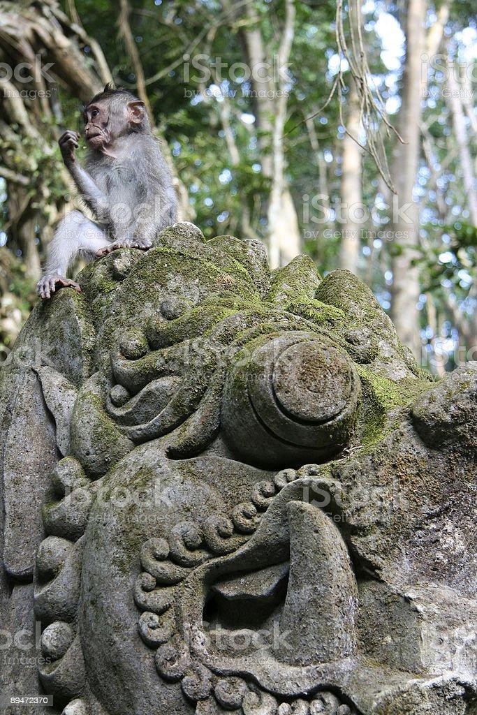 monkey forest ubud bali royalty-free stock photo