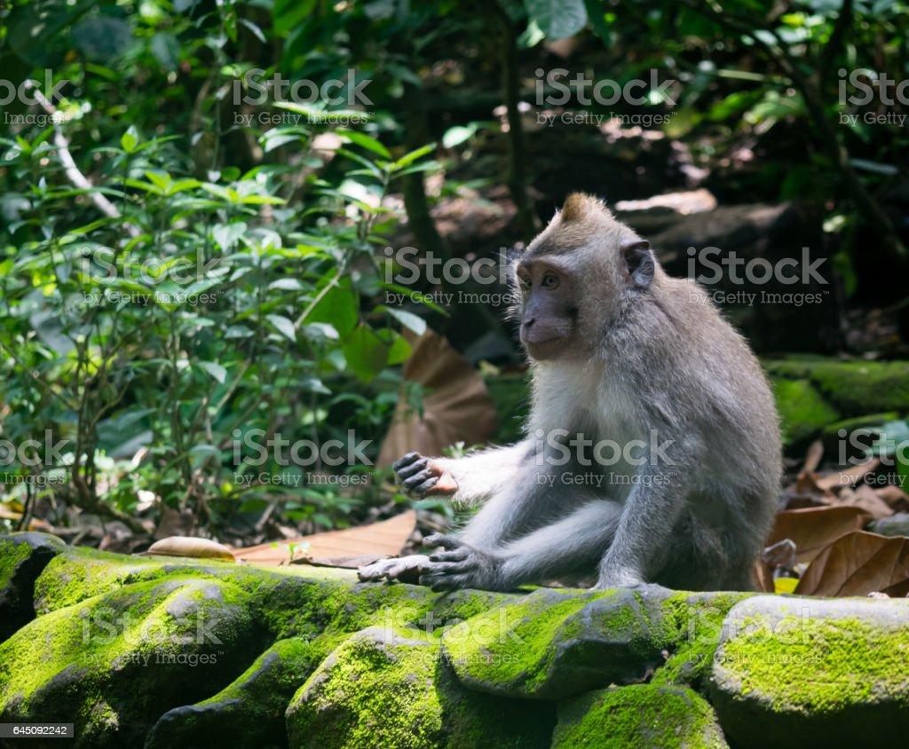 Monkey Forest, Ubud stock photo