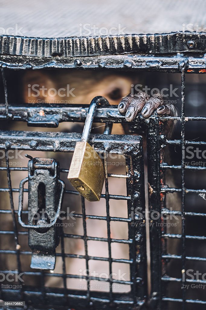 Monkey hand on  the cage royalty-free stock photo