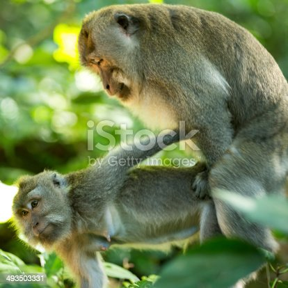 Accept. Two monkeys having sex