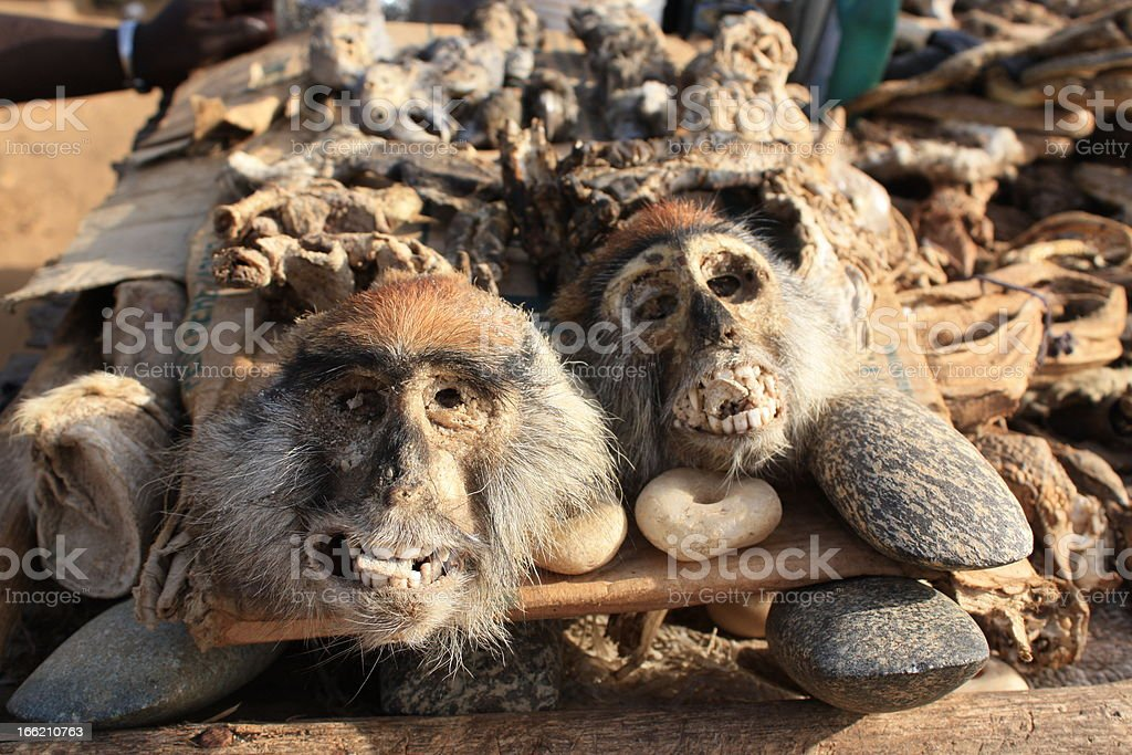 Monkey Head, Voodoo Supplies at Akodessewa Fetish Market, West Africa stock photo