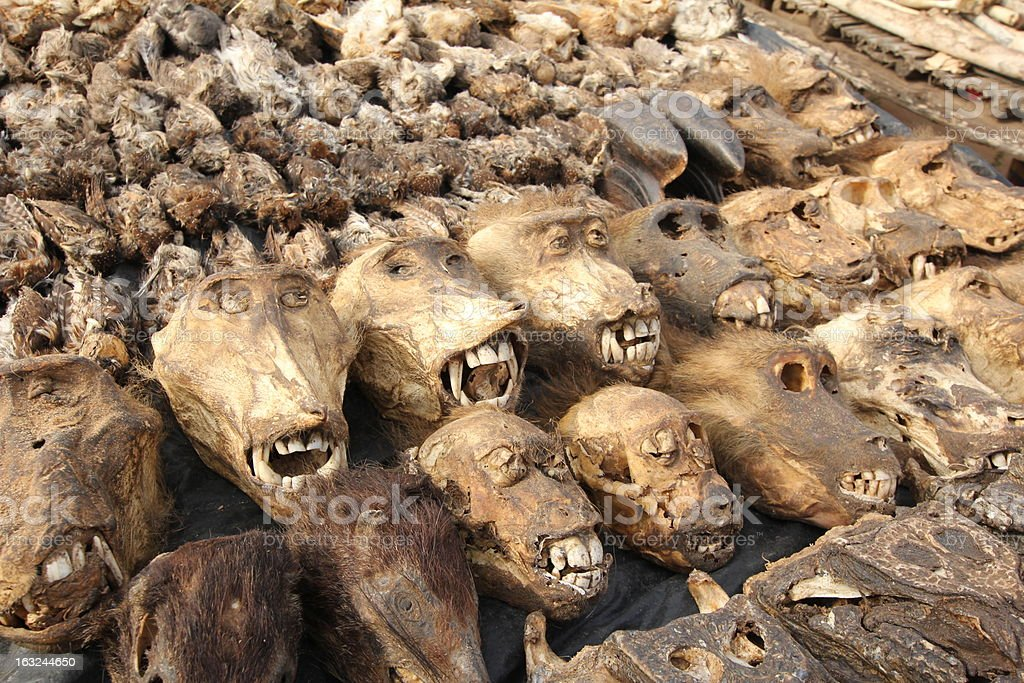 Monkey Heads at Akodessewa Voodoo or Fetish Market, West Africa royalty-free stock photo