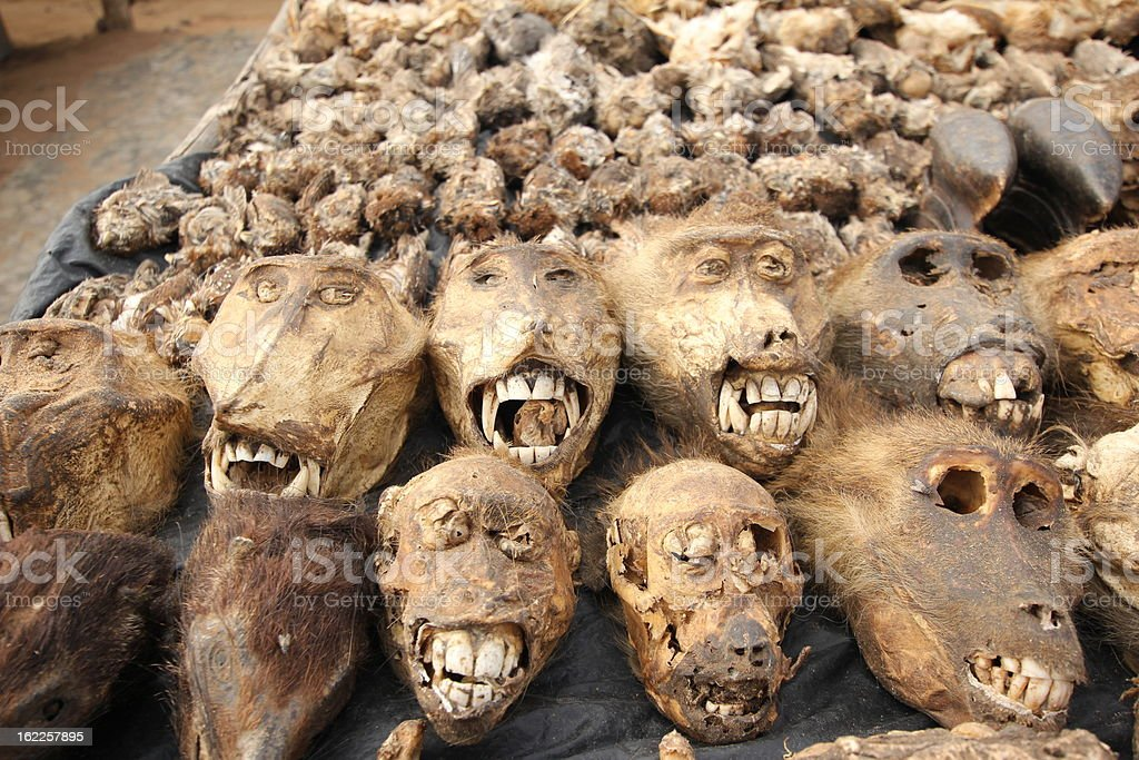 Monkey Heads at the Voodoo market in Lom?, Togo stock photo