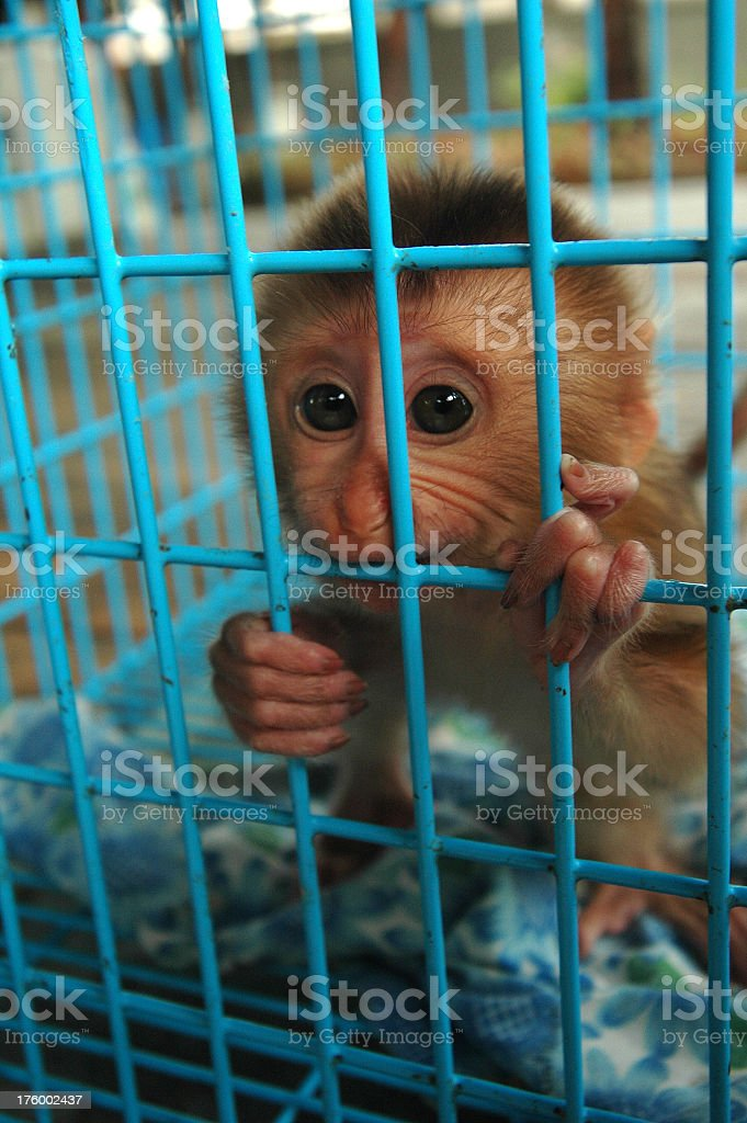 Monkey in a cage Chatuchak market stock photo