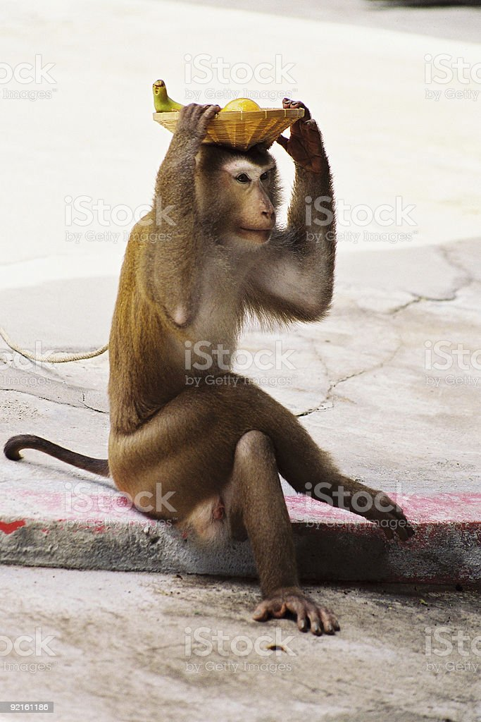 Monkey in a Thailand Zoo royalty-free stock photo