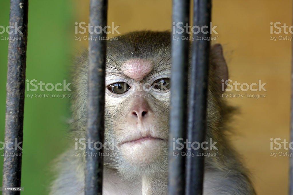 Monkey in a zoo stock photo