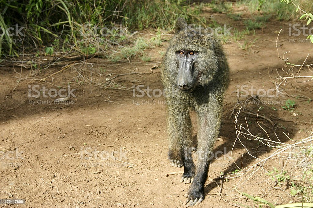 Monkey in nature stock photo