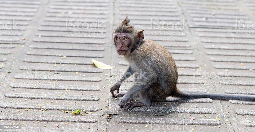Monkey in the wild stock photo