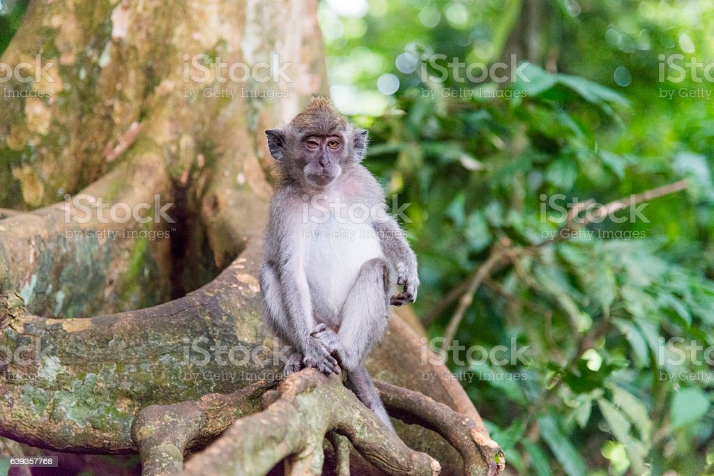 Monkey in the wild stock photo