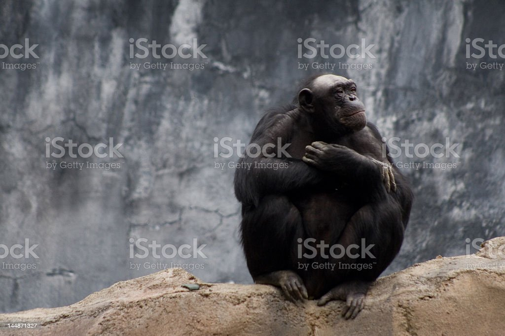 Affe in Gedanken Lizenzfreies stock-foto