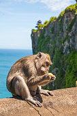 Monkey in Uluwatu on the edge