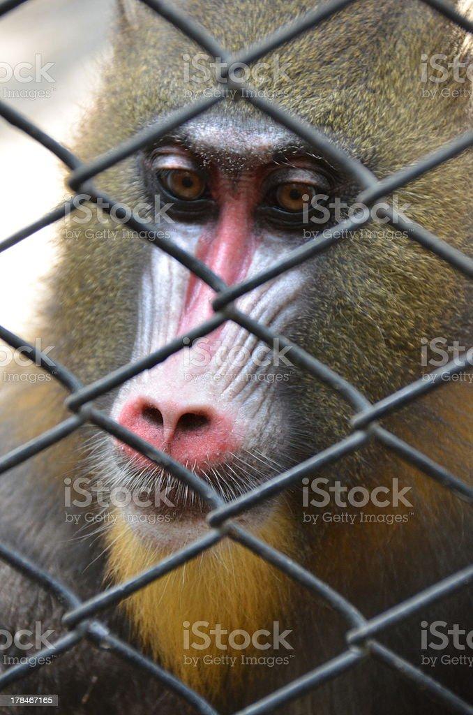 Monkey in zoo stock photo