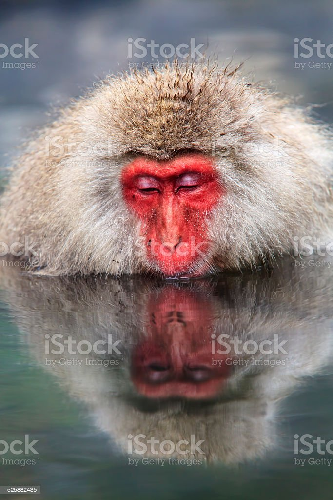 monkey is relaxation stock photo
