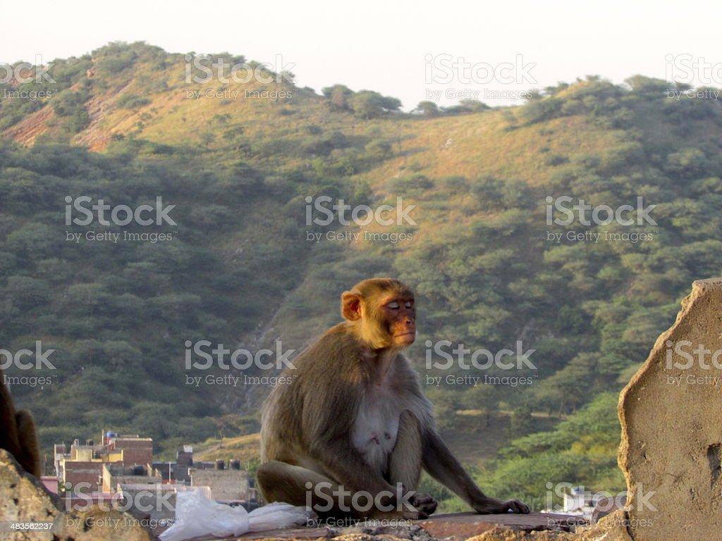 Monkey Landscape stock photo