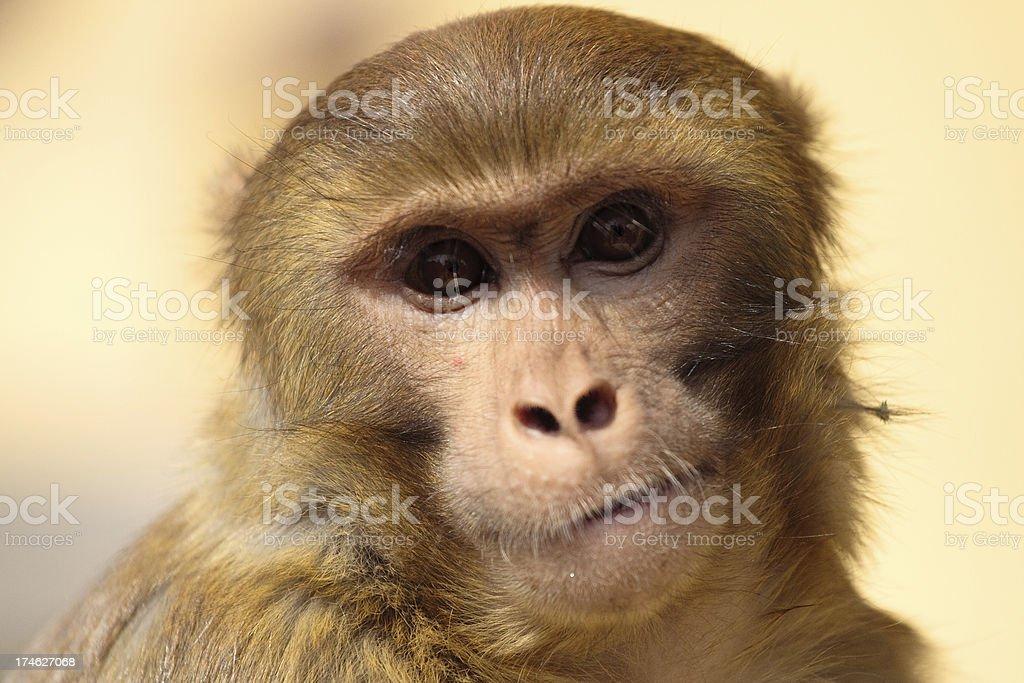 Monkey Magic royalty-free stock photo