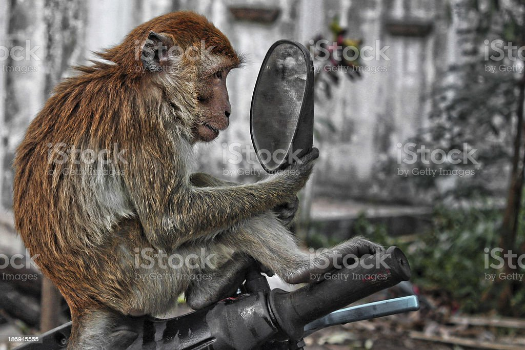 Monkey Mirror stock photo