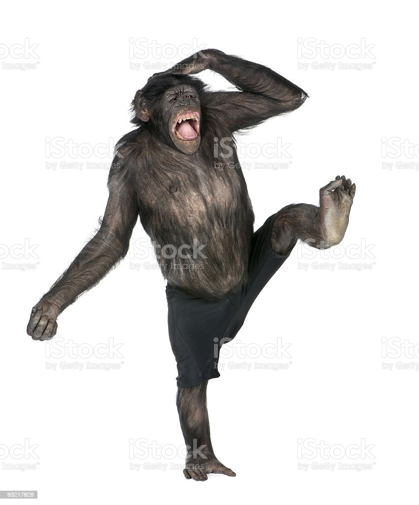 Monkey monkeying and screaming on one foot stock photo