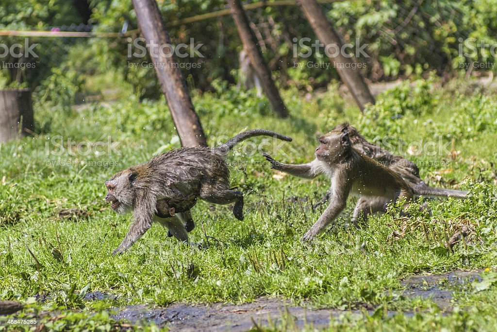 Monkey mother and its baby escaping stock photo