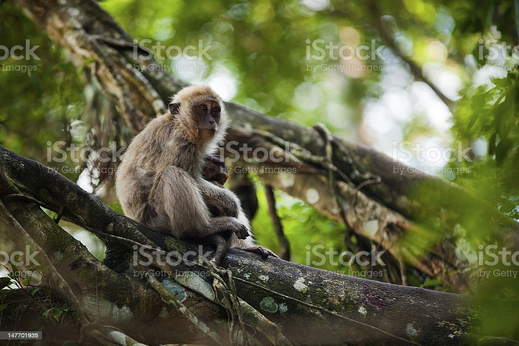 Monkey mother with her baby in the wilderness stock photo