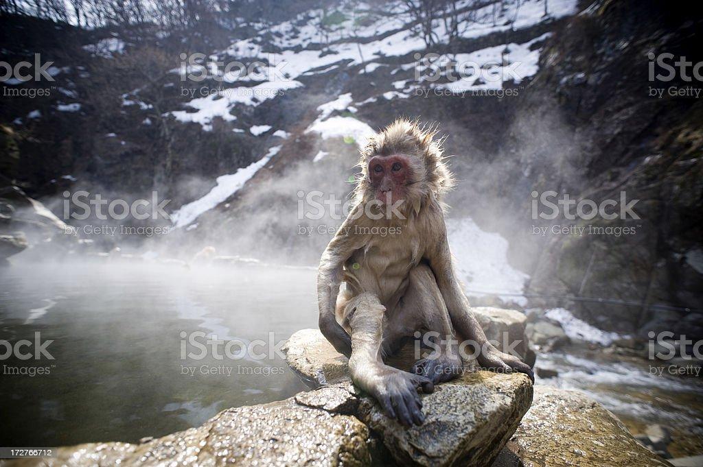 monkey next to onsen pool stock photo