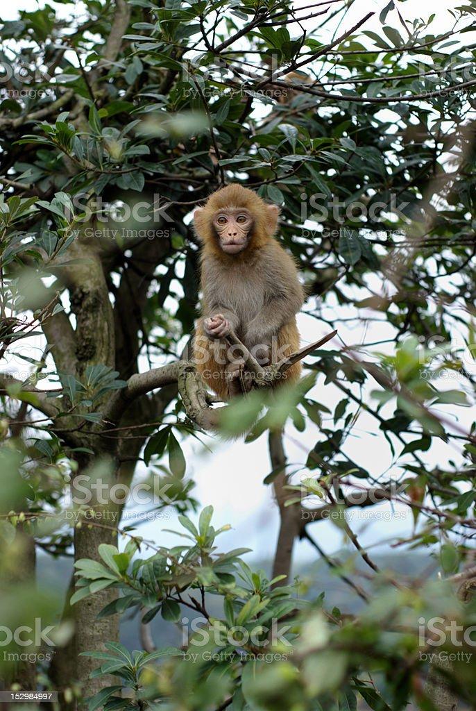 Monkey zbiór zdjęć royalty-free