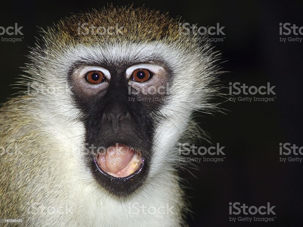 monkey playing in the water green grass surprised stock photo