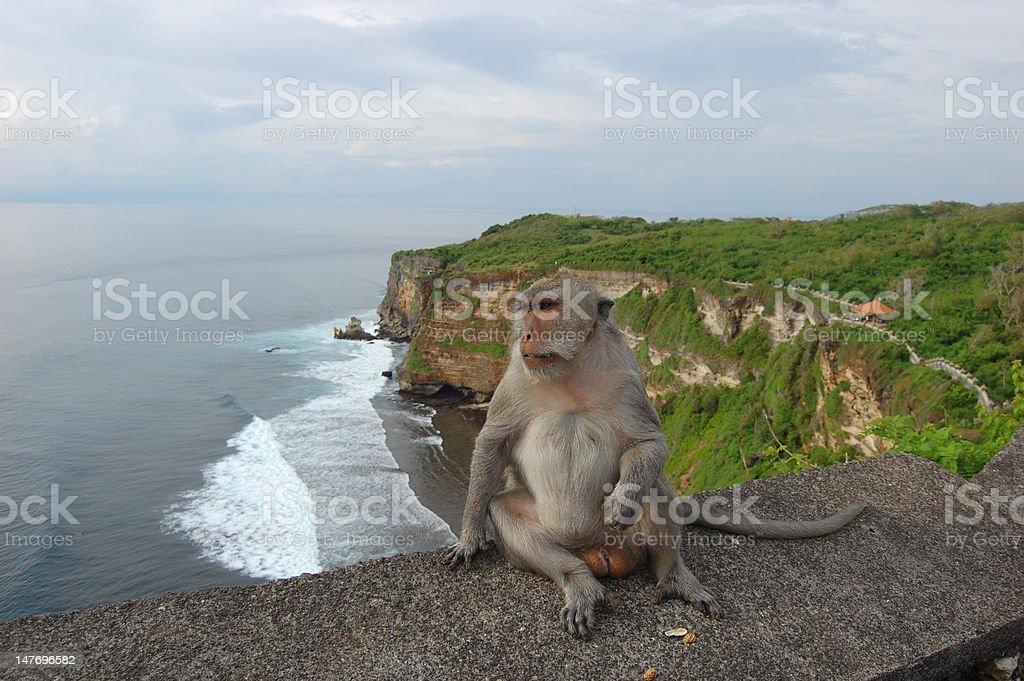 monkey poses on the cliffs at Ulu Watu, Bali stock photo