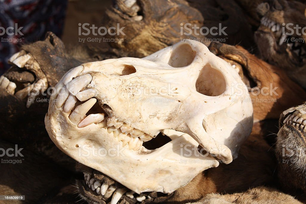Monkey Skull at Akodessewa Fetish Market, Togo, West Africa stock photo