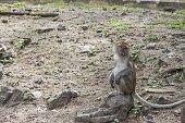 monkey stand on floor selective focus