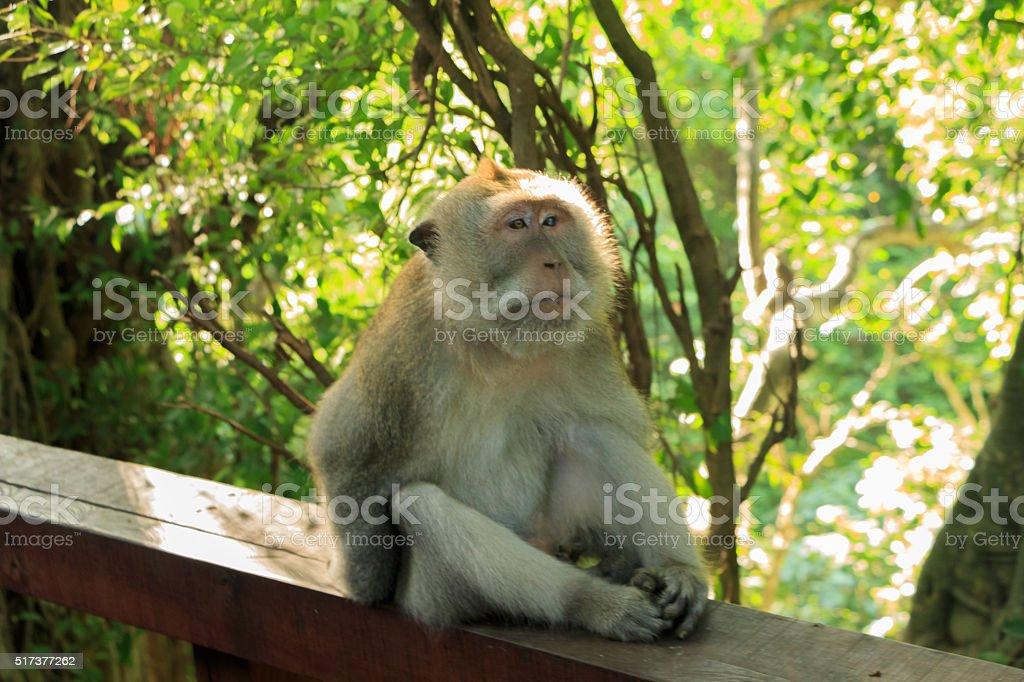 Monkey takes a break stock photo