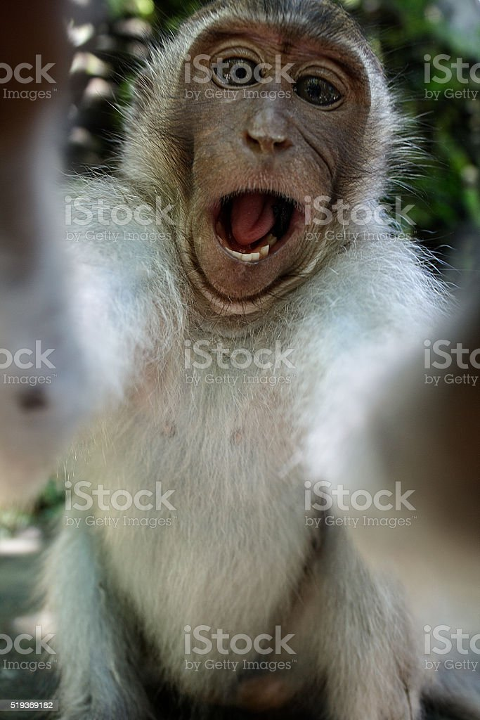 Monkey taking a selfie stock photo