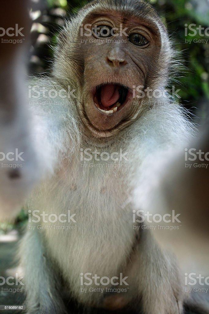 Monkey taking a selfie stock photo