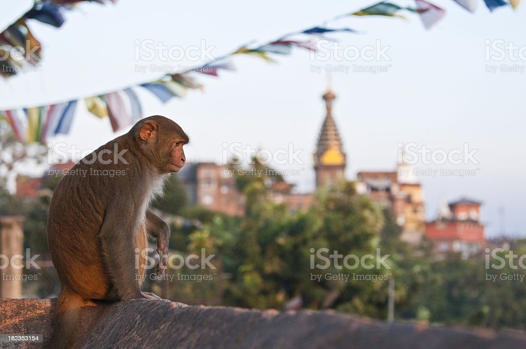 Monkey temple buddhist prayer flags sunset Swayambhunath Kathmandu Nepal stock photo