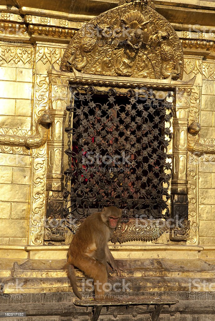 Monkey temple detail royalty-free stock photo