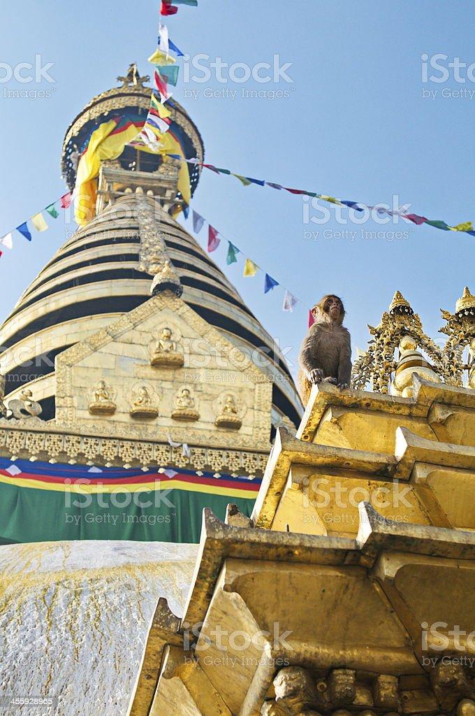 Monkey Temple in Kathmandhu, Nepal royalty-free stock photo