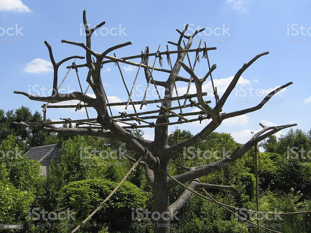 Monkey Tree stock photo