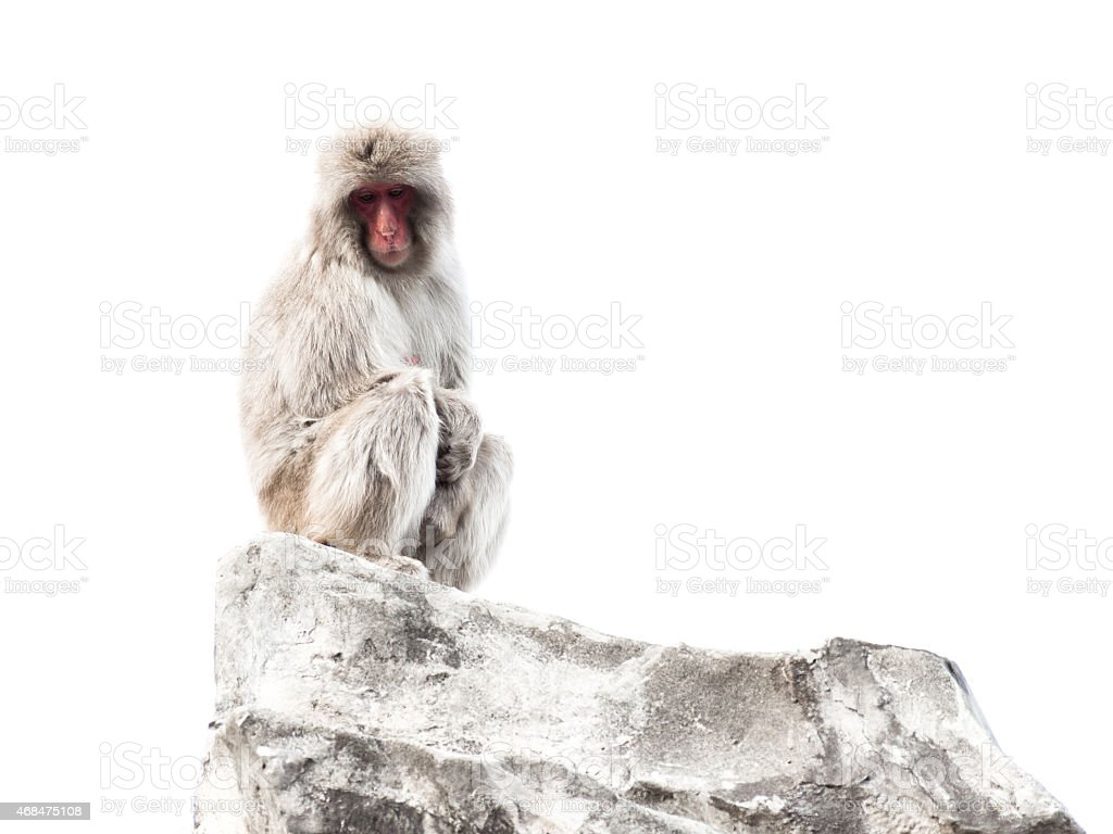 monkey with clever calm eyes stock photo