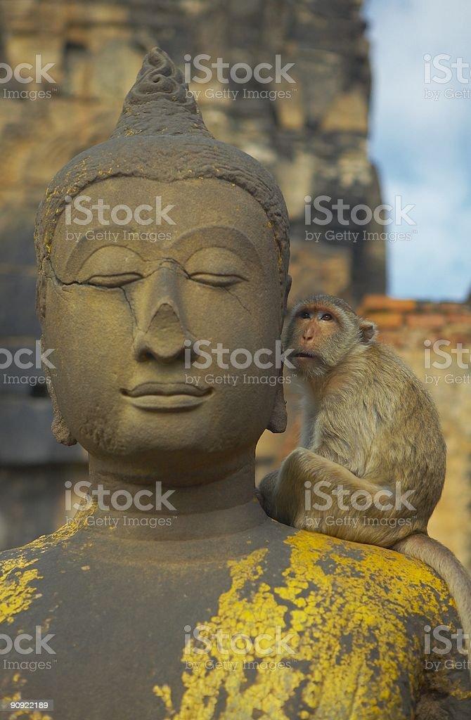 monkey-d stock photo