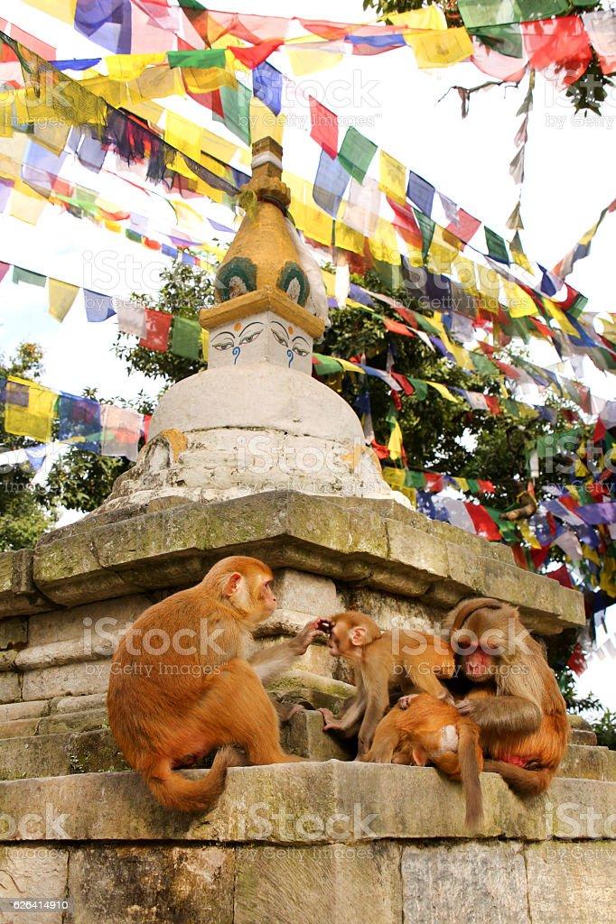 Monkeys at Swayambhu Nath Monkey temple, Kathmandu, Nepal. stock photo