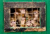 Monkeys behind bars
