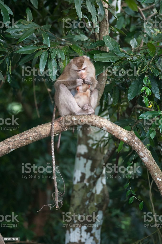 Monkeys checking for fleas and ticks on concrete fence stock photo