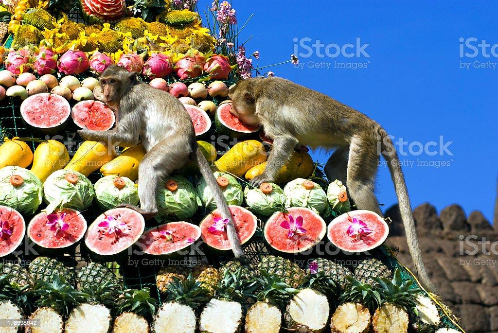 Monkeys eating fruits in Monkey Buffet Festival, Thailand stock photo